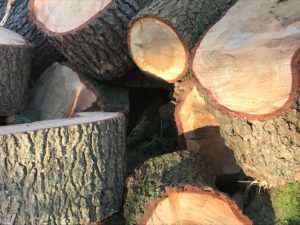 A pile of logs