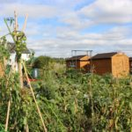 Vegetable plots with sheds behind