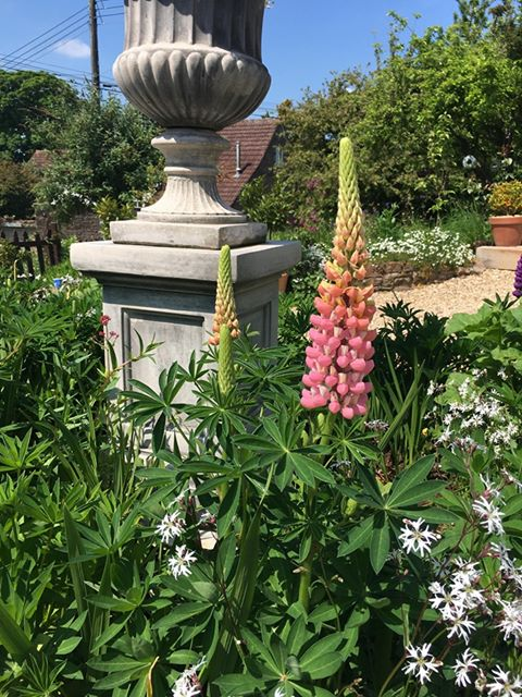 Pink lupin and sculpture