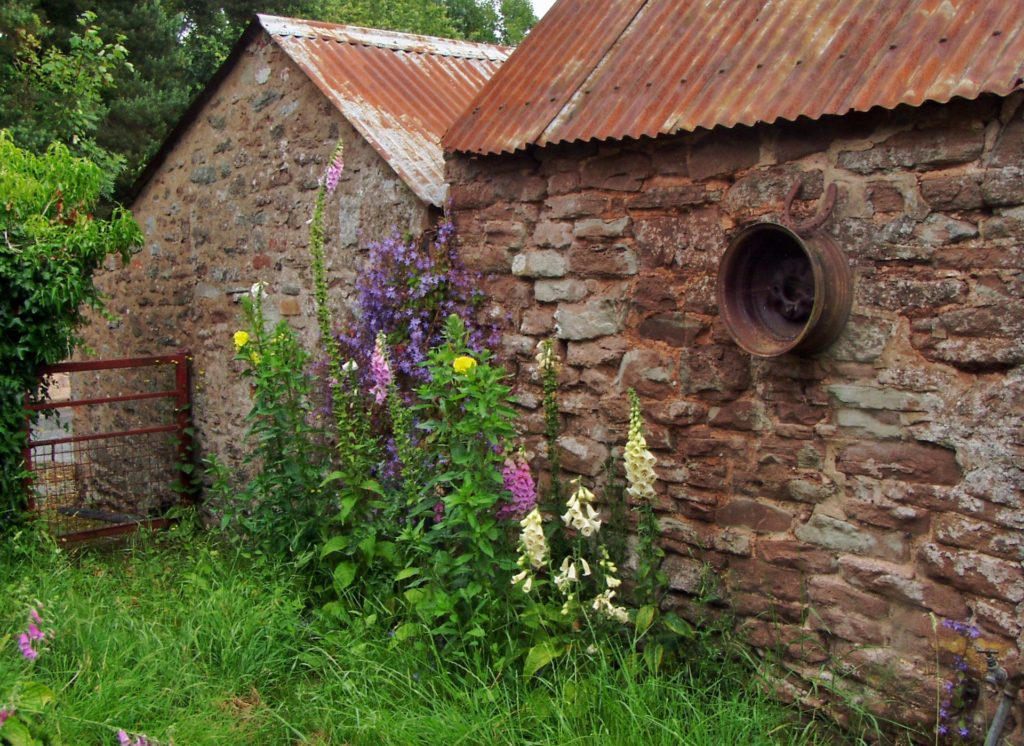 Stone wall with foxgloves in front