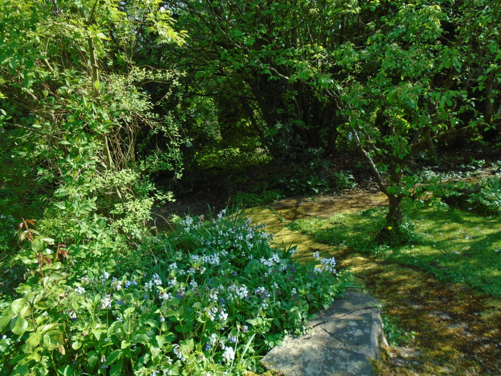 Stone path with grass to the right and white and blue flowers to the left