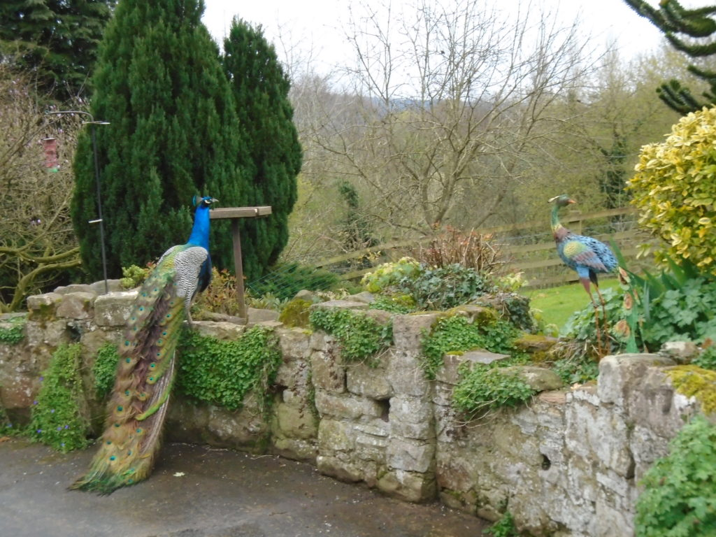 Peacock perched on stone wall in garden with a peacock sculpture