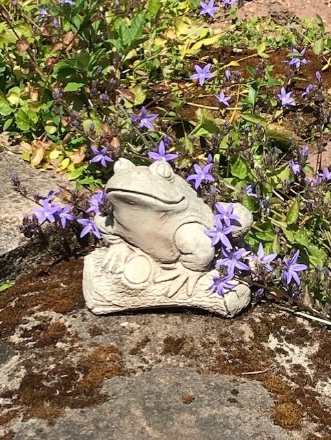 Purple flowers and a frog statue