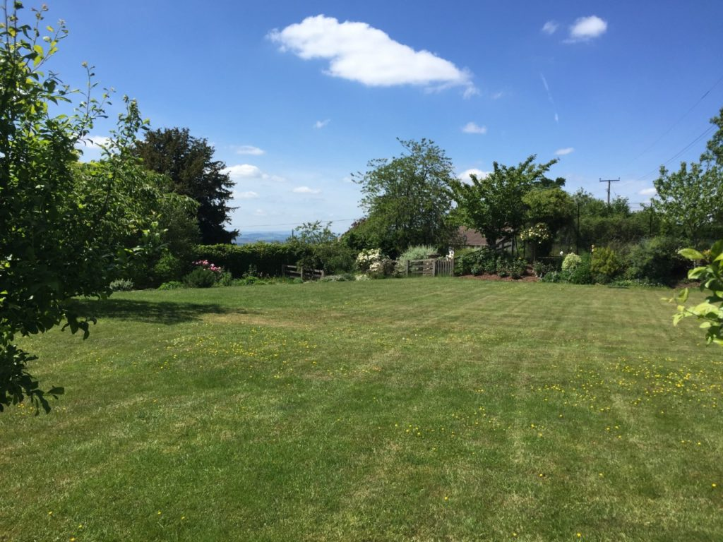 Lawn surrounded by trees and a blue sky with one white cloud