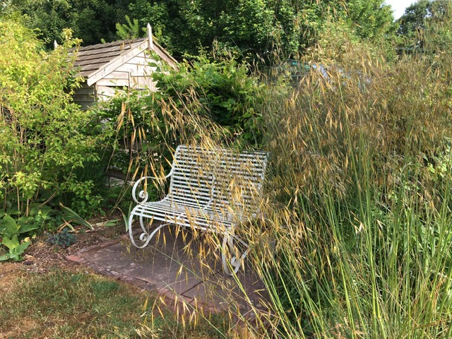 A bench and shed surrounded by ornamental grasses