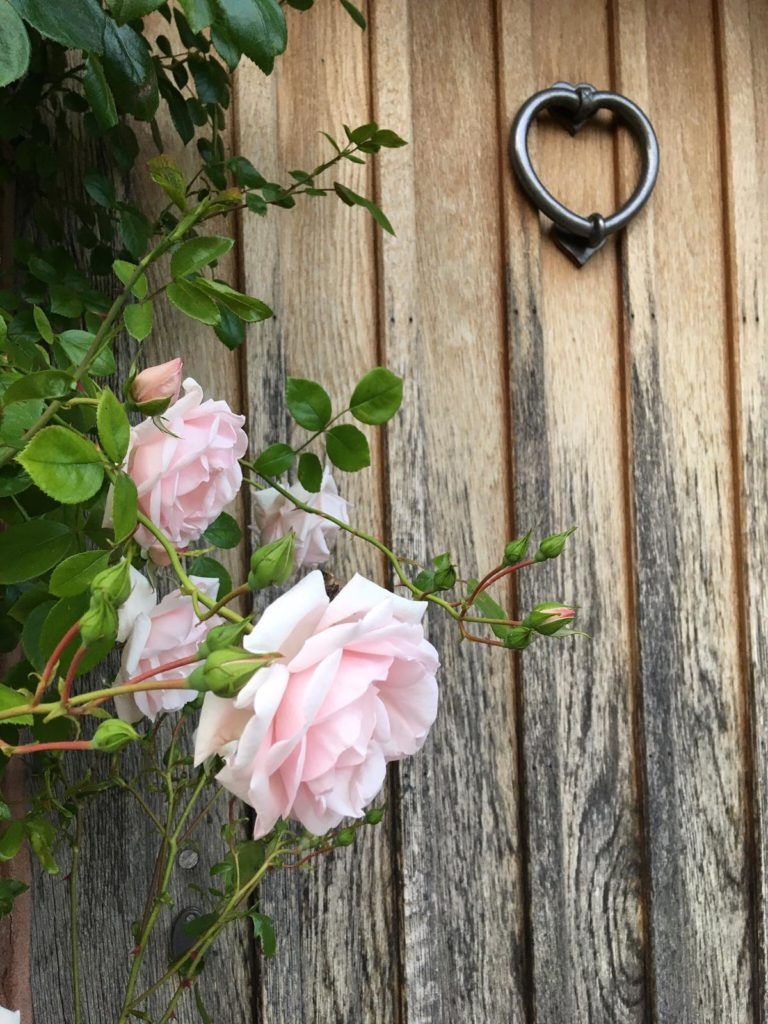 Pink roses against a wooden door with a metal knocker