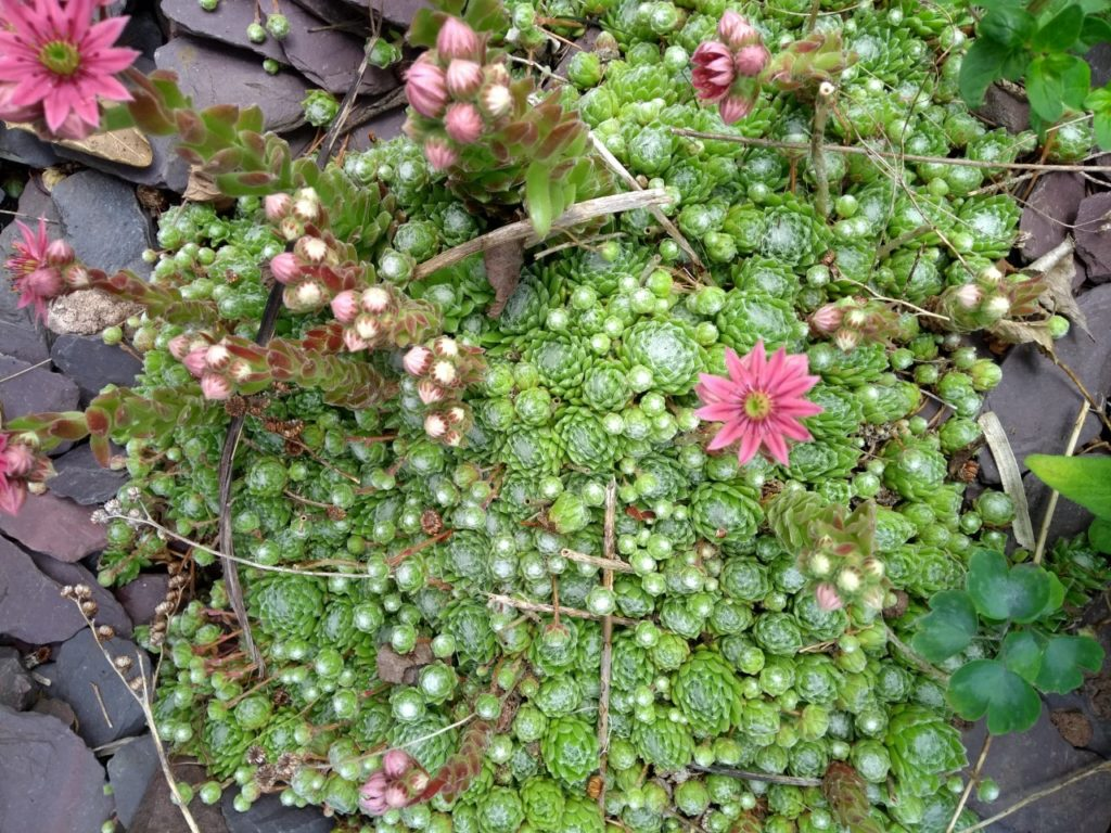 Pink and green plants