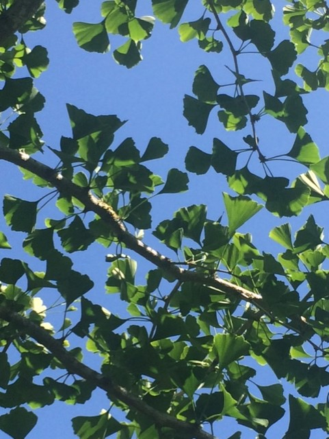 Blue sky seen through the leaves of a tree