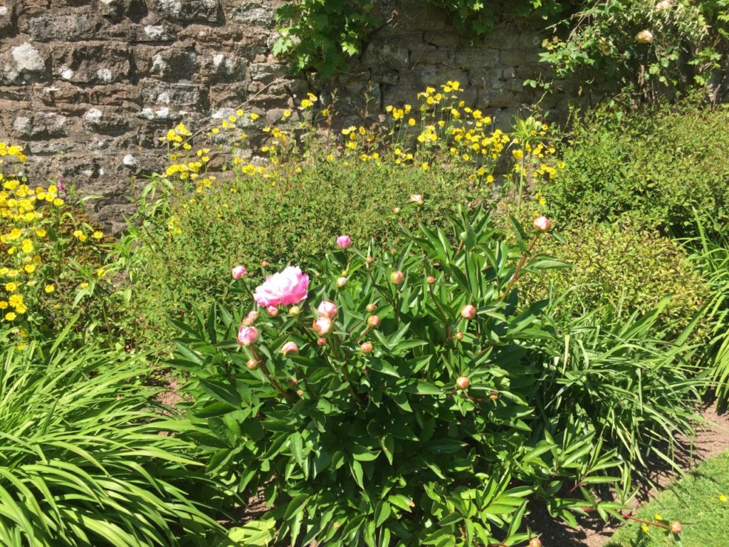 Yellow and pink flowers in front of a wall