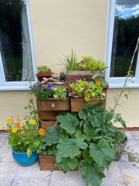 A chest of drawers being used to grow plants