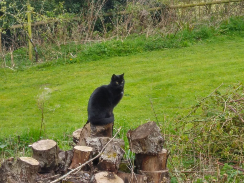 A black cat sitting on a wooden stump