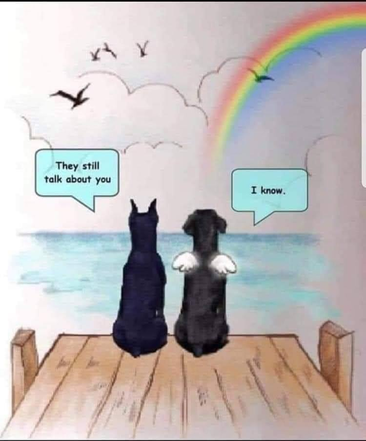 Cartoon of pets who are no longer with us