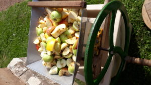 Pieces of apple in a press