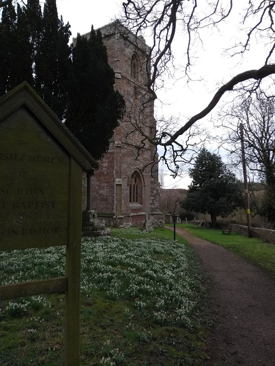 snowdrops blooming in the church yard