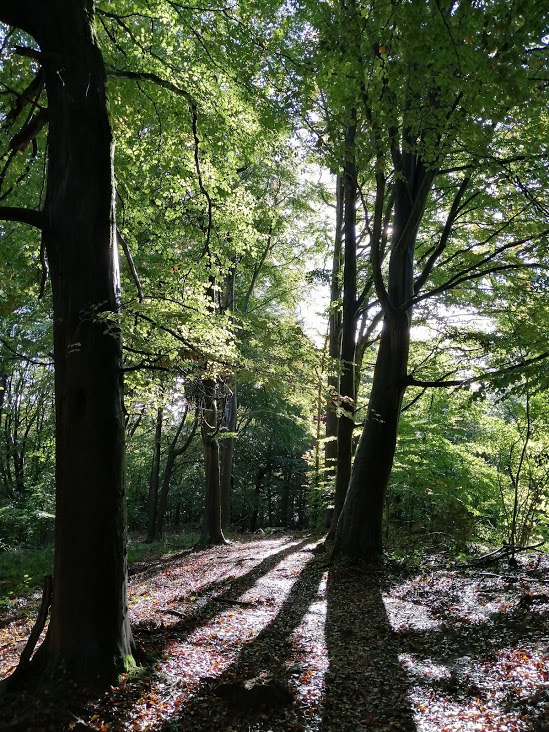 Sunlight coming through trees in a wood