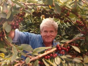 Photograph of Bob Simpson standing amidst his cherry trees